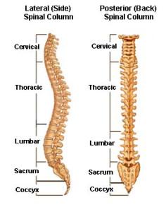 Spinal_Stenosis3